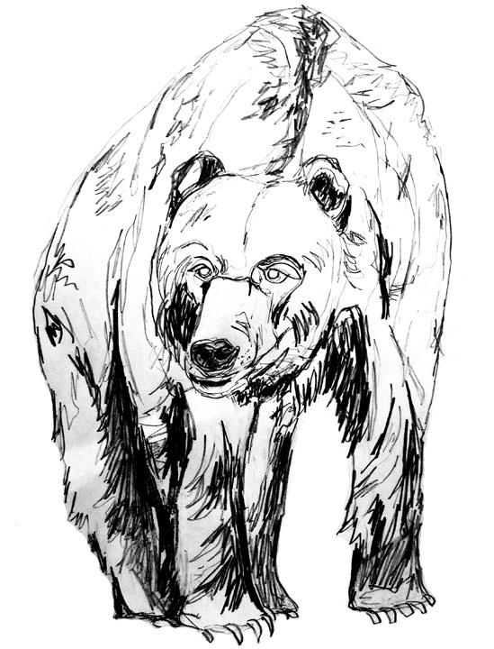 thebear2
